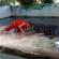 بالفيديو: تمساح يلتهم رأس حارسه